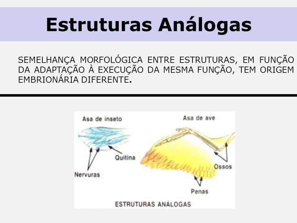 Estruturas Análogas semelhança morfológica entre estruturas, em função da adaptação à execução da mesma função, tem origem embrionária diferente.
