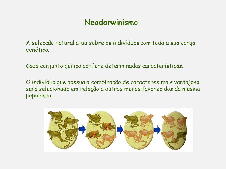 Neodarwinismo A selecção natural atua sobre os indivíduos com toda a sua carga genética. Cada conjunto génico confere determinadas características.