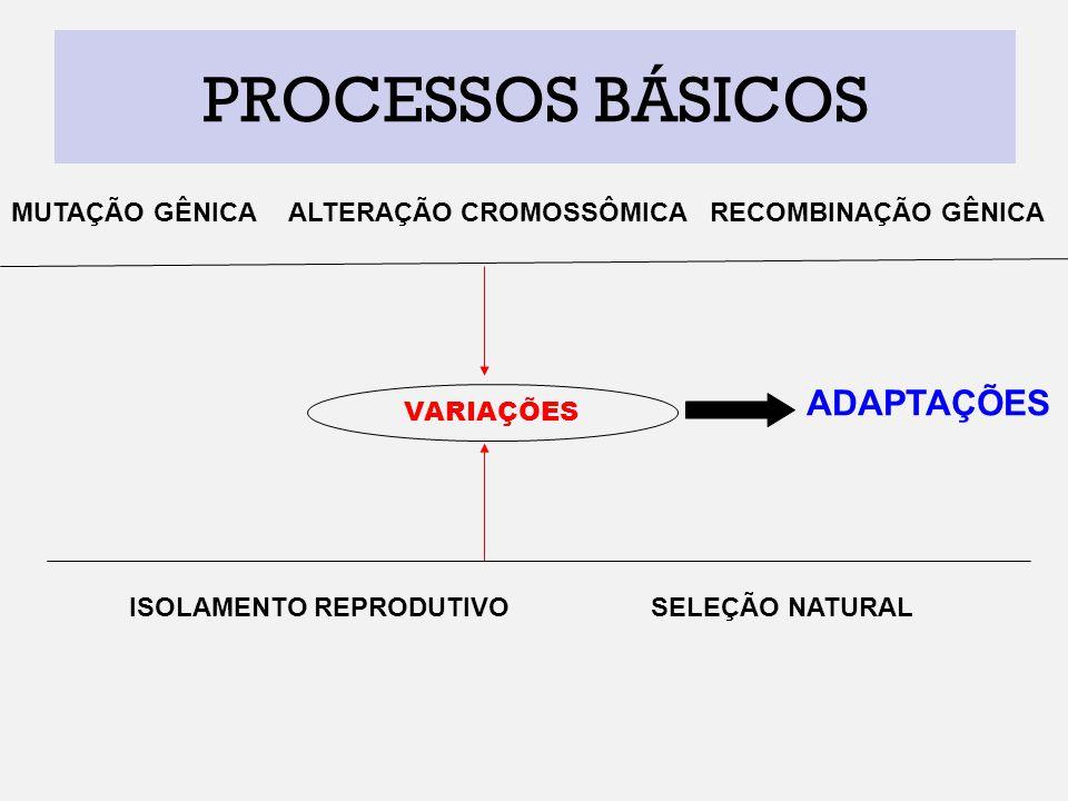 PROCESSOS BÁSICOS ADAPTAÇÕES MUTAÇÃO GÊNICA ALTERAÇÃO CROMOSSÔMICA