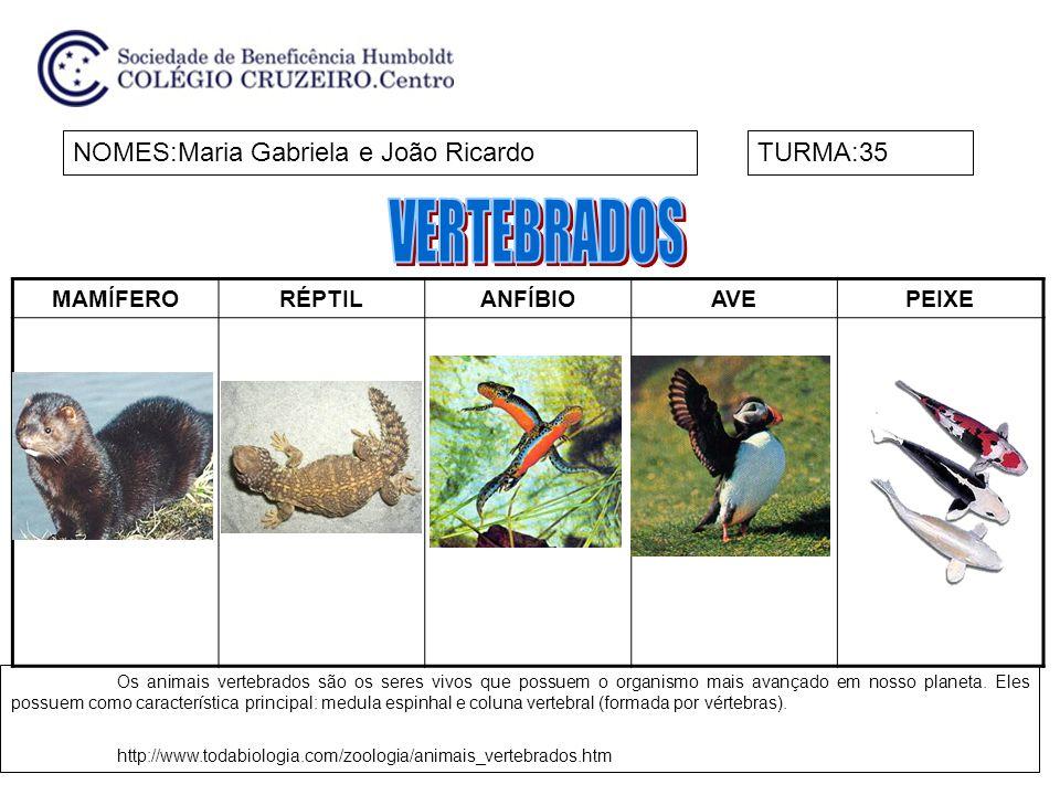VERTEBRADOS NOMES:Maria Gabriela e João Ricardo TURMA:35 MAMÍFERO