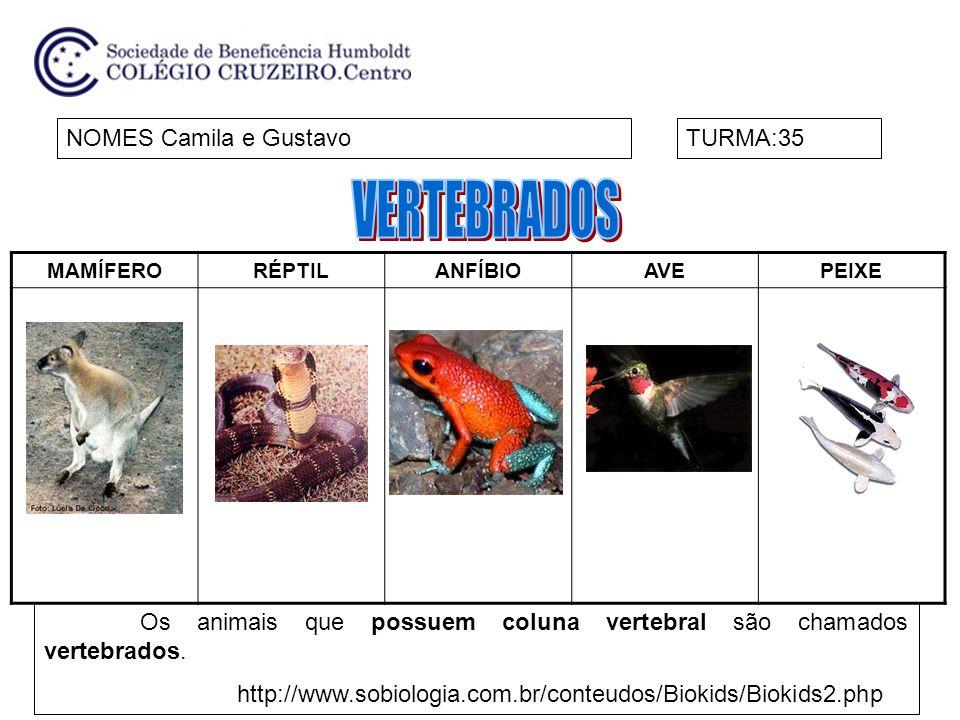VERTEBRADOS NOMES Camila e Gustavo TURMA:35