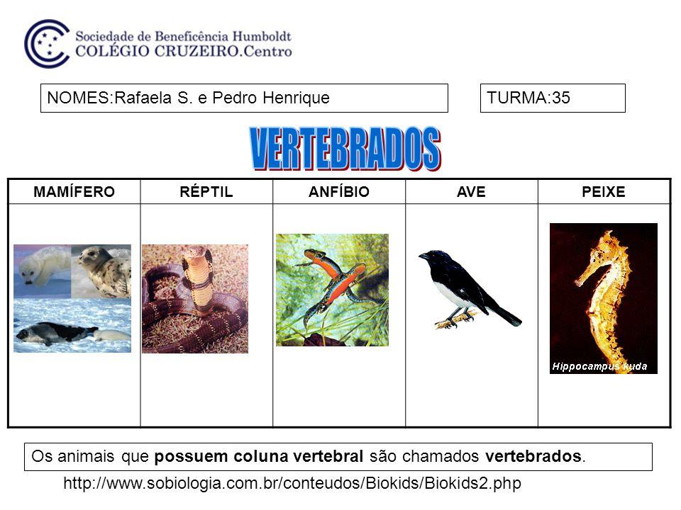 VERTEBRADOS NOMES:Rafaela S. e Pedro Henrique TURMA:35
