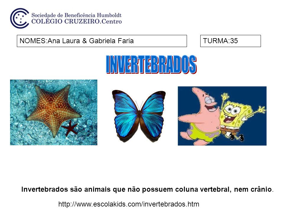 INVERTEBRADOS NOMES:Ana Laura & Gabriela Faria TURMA:35