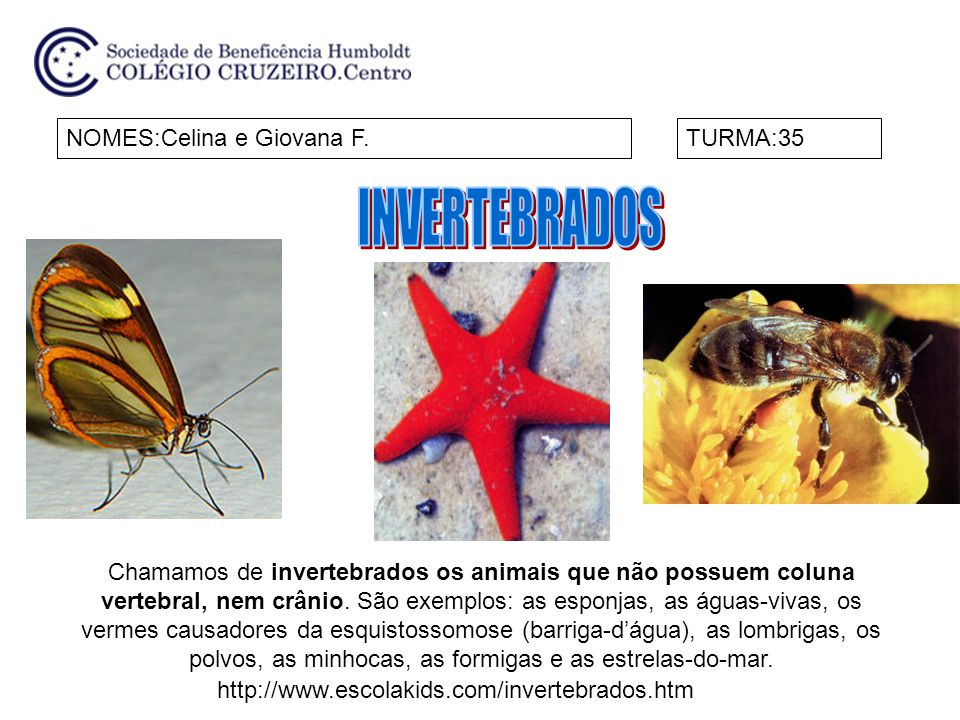 INVERTEBRADOS NOMES:Celina e Giovana F. TURMA:35