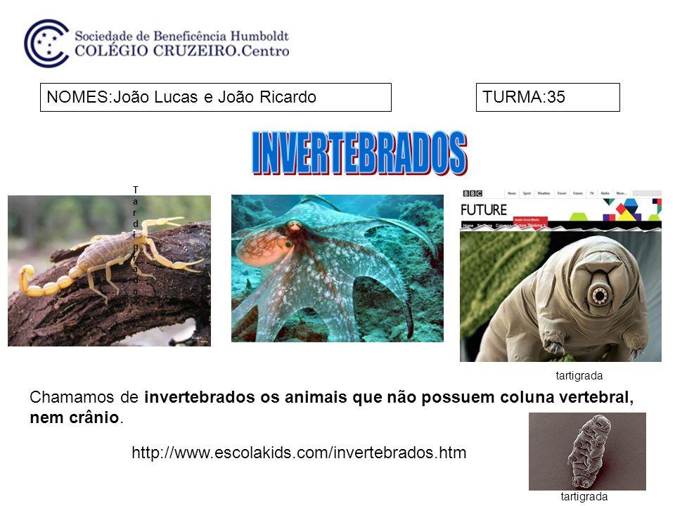 INVERTEBRADOS NOMES:João Lucas e João Ricardo TURMA:35