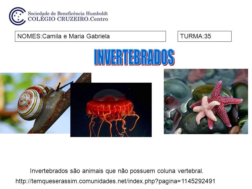 Invertebrados são animais que não possuem coluna vertebral.