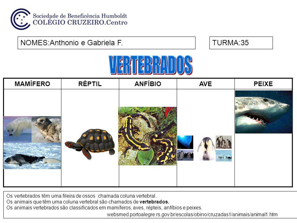 VERTEBRADOS NOMES:Anthonio e Gabriela F. TURMA:35 MAMÍFERO RÉPTIL