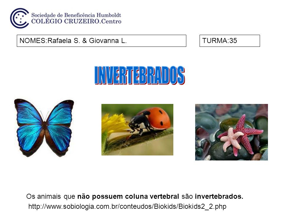 INVERTEBRADOS NOMES:Rafaela S. & Giovanna L. TURMA:35