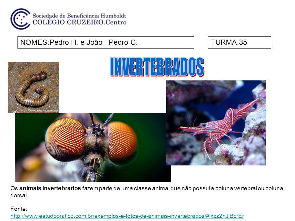 INVERTEBRADOS NOMES:Pedro H. e João Pedro C. TURMA:35