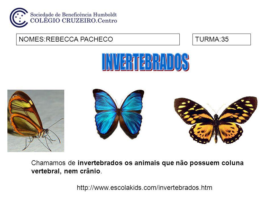 INVERTEBRADOS NOMES:REBECCA PACHECO TURMA:35