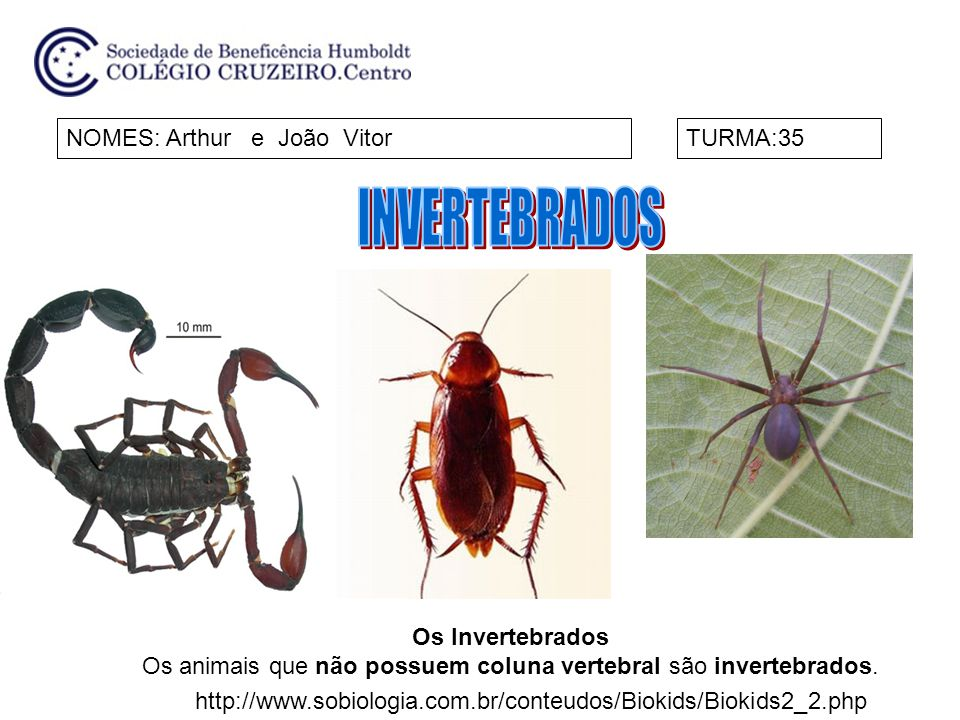 Os animais que não possuem coluna vertebral são invertebrados.