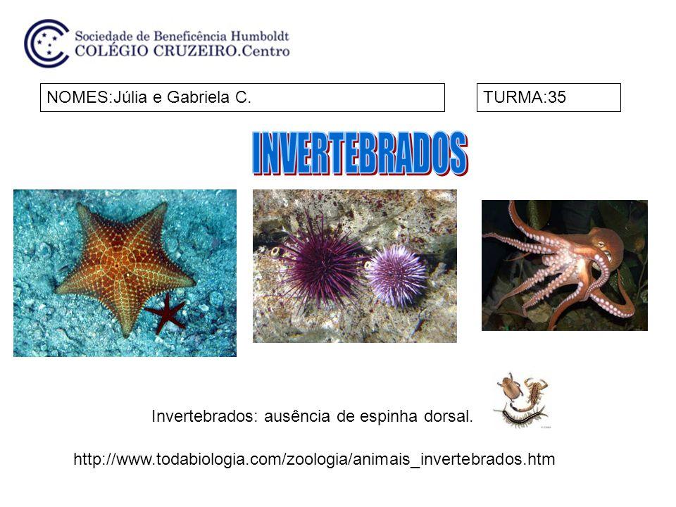 INVERTEBRADOS NOMES:Júlia e Gabriela C. TURMA:35