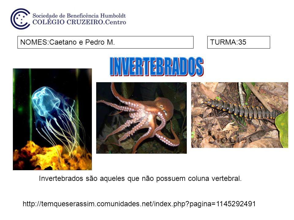 INVERTEBRADOS NOMES:Caetano e Pedro M. TURMA:35
