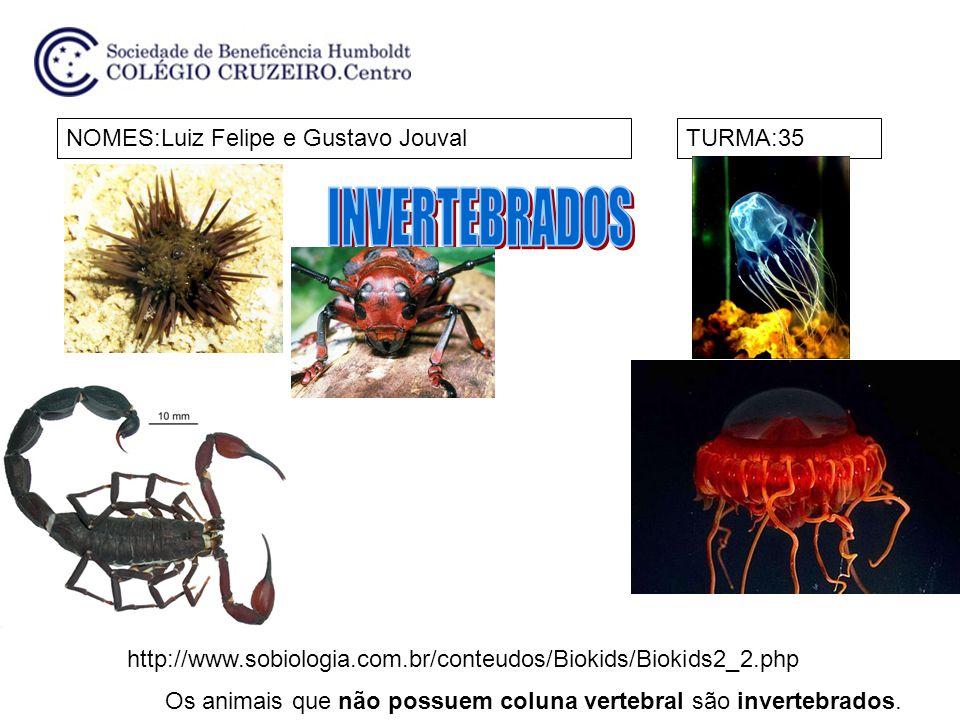 INVERTEBRADOS NOMES:Luiz Felipe e Gustavo Jouval TURMA:35