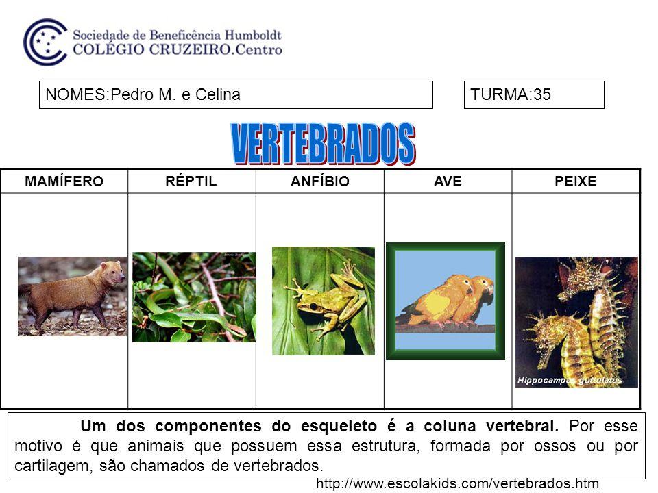 VERTEBRADOS NOMES:Pedro M. e Celina TURMA:35