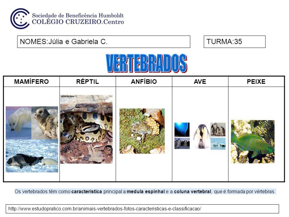 VERTEBRADOS NOMES:Júlia e Gabriela C. TURMA:35 MAMÍFERO RÉPTIL ANFÍBIO