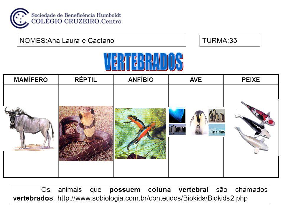 VERTEBRADOS NOMES:Ana Laura e Caetano TURMA:35