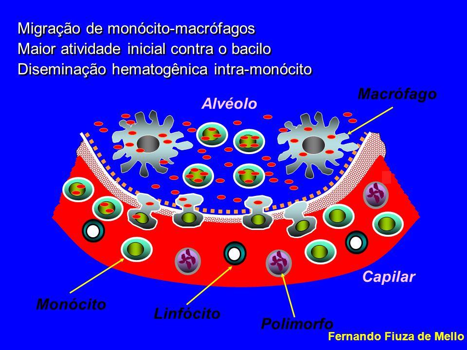 Migração de monócito-macrófagos