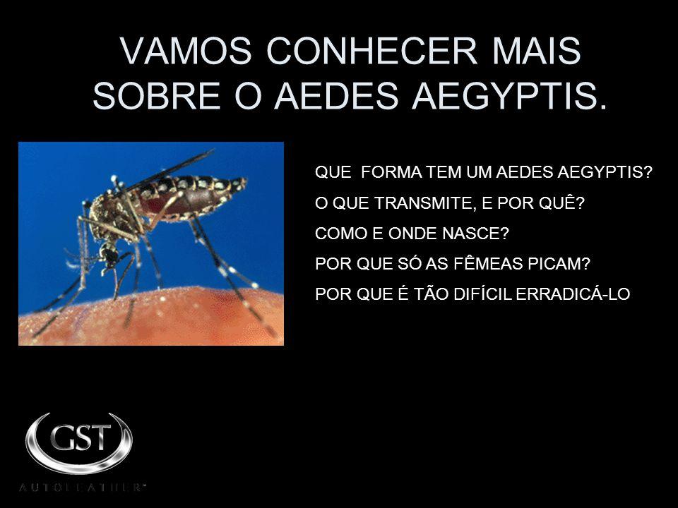VAMOS CONHECER MAIS SOBRE O AEDES AEGYPTIS.