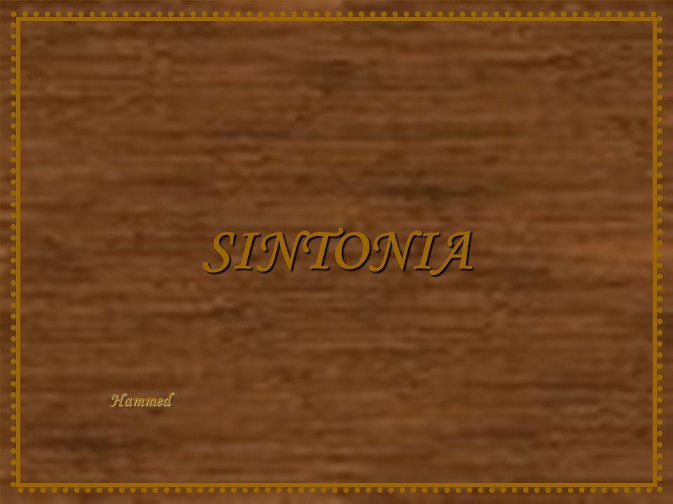 SINTONIA Hammed