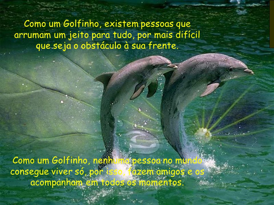 Como um Golfinho, existem pessoas que arrumam um jeito para tudo, por mais difícil que seja o obstáculo à sua frente.