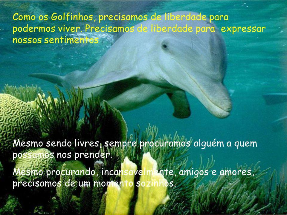 Como os Golfinhos, precisamos de liberdade para podermos viver