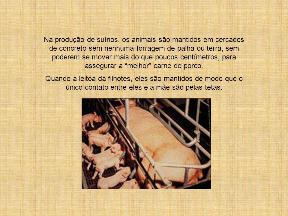Na produção de suínos, os animais são mantidos em cercados de concreto sem nenhuma forragem de palha ou terra, sem poderem se mover mais do que poucos centímetros, para assegurar a melhor carne de porco.