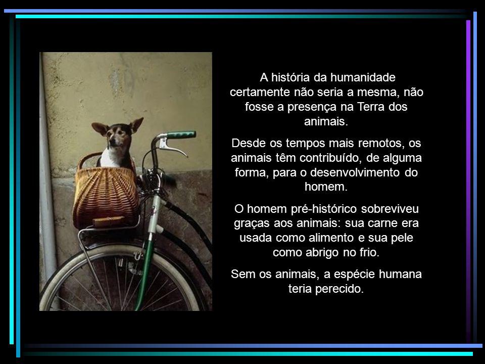 Sem os animais, a espécie humana teria perecido.