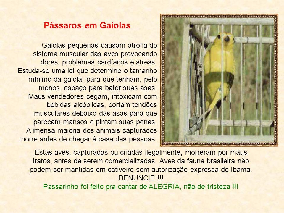 Passarinho foi feito pra cantar de ALEGRIA, não de tristeza !!!