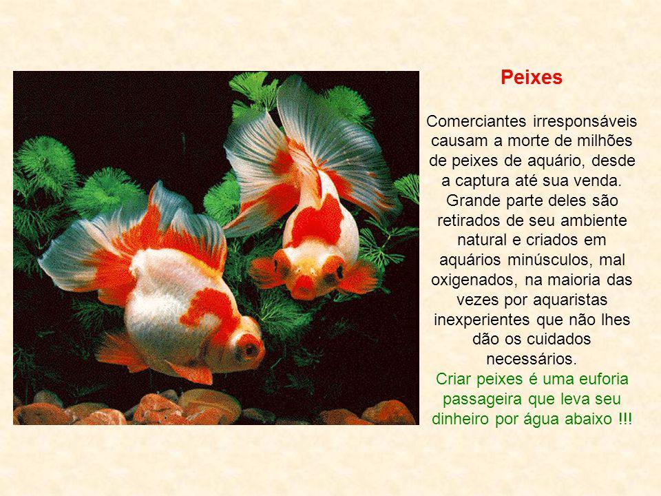 Peixes Comerciantes irresponsáveis causam a morte de milhões de peixes de aquário, desde a captura até sua venda.