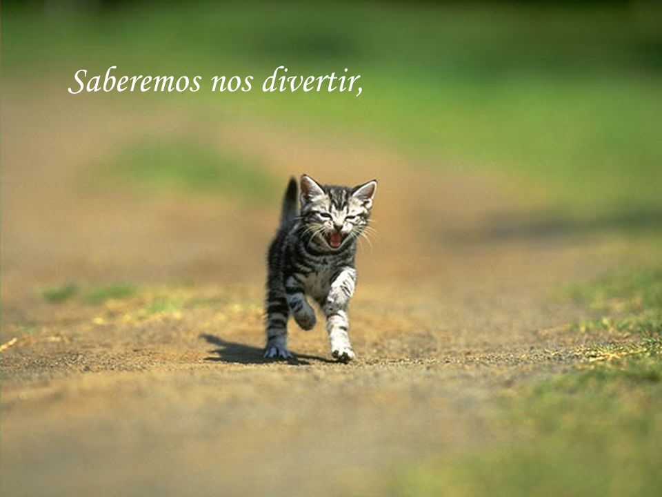 Saberemos nos divertir,