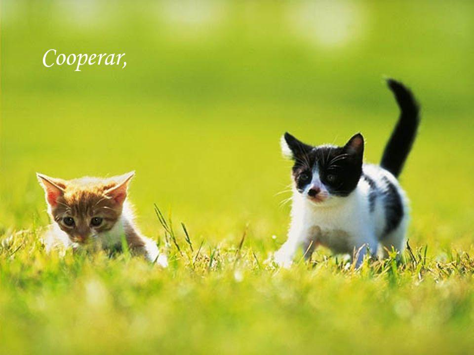 Cooperar,