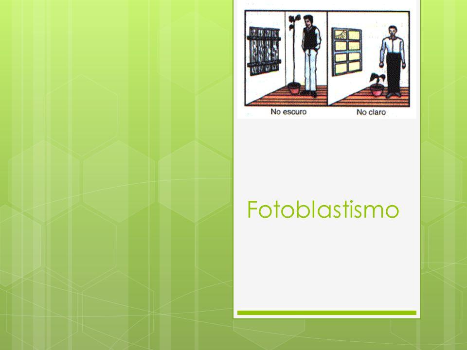 Fotoblastismo