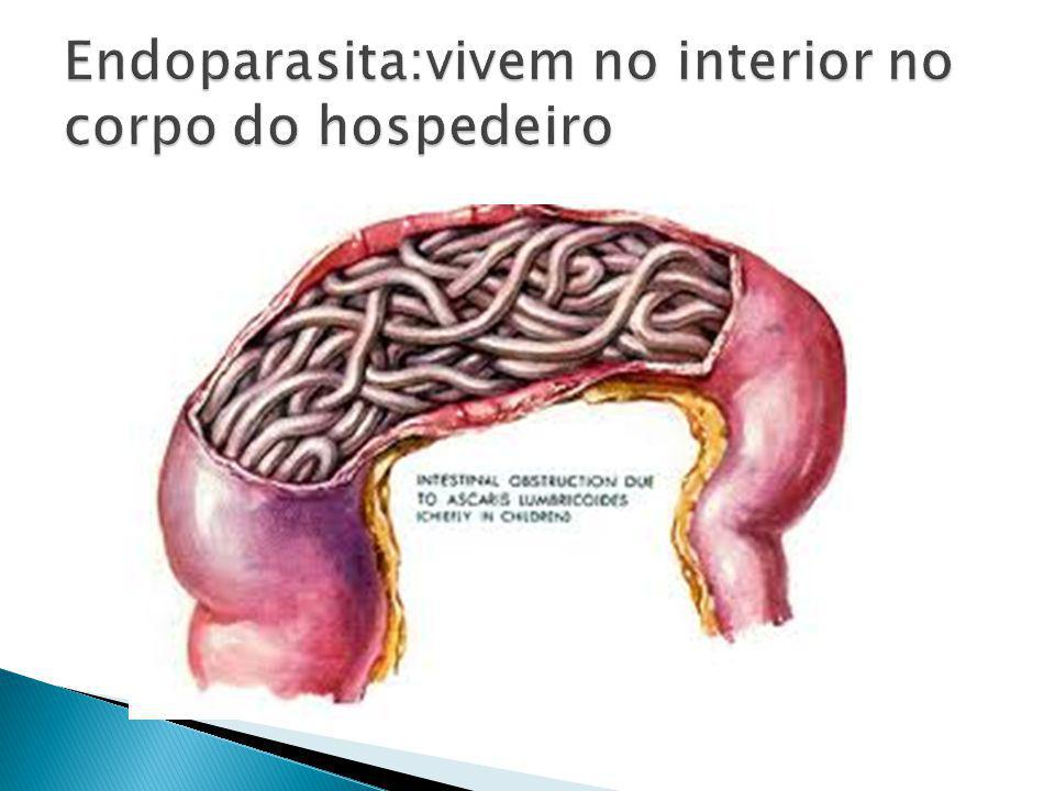 Endoparasita:vivem no interior no corpo do hospedeiro