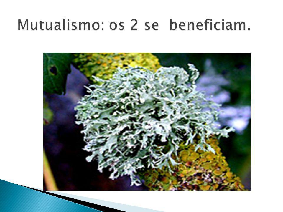 Mutualismo: os 2 se beneficiam.