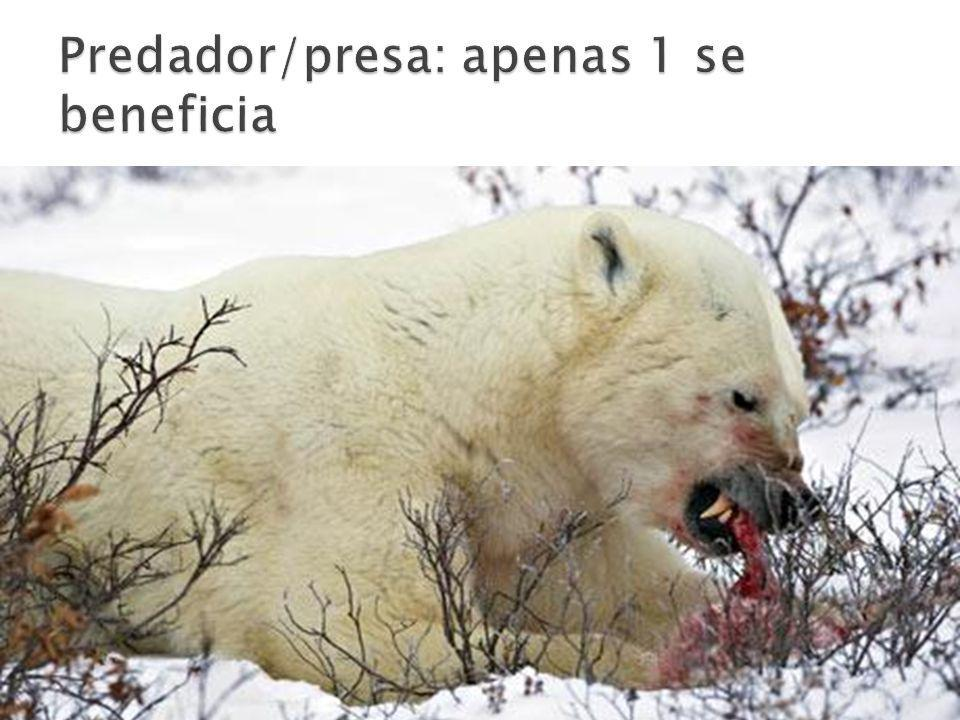 Predador/presa: apenas 1 se beneficia