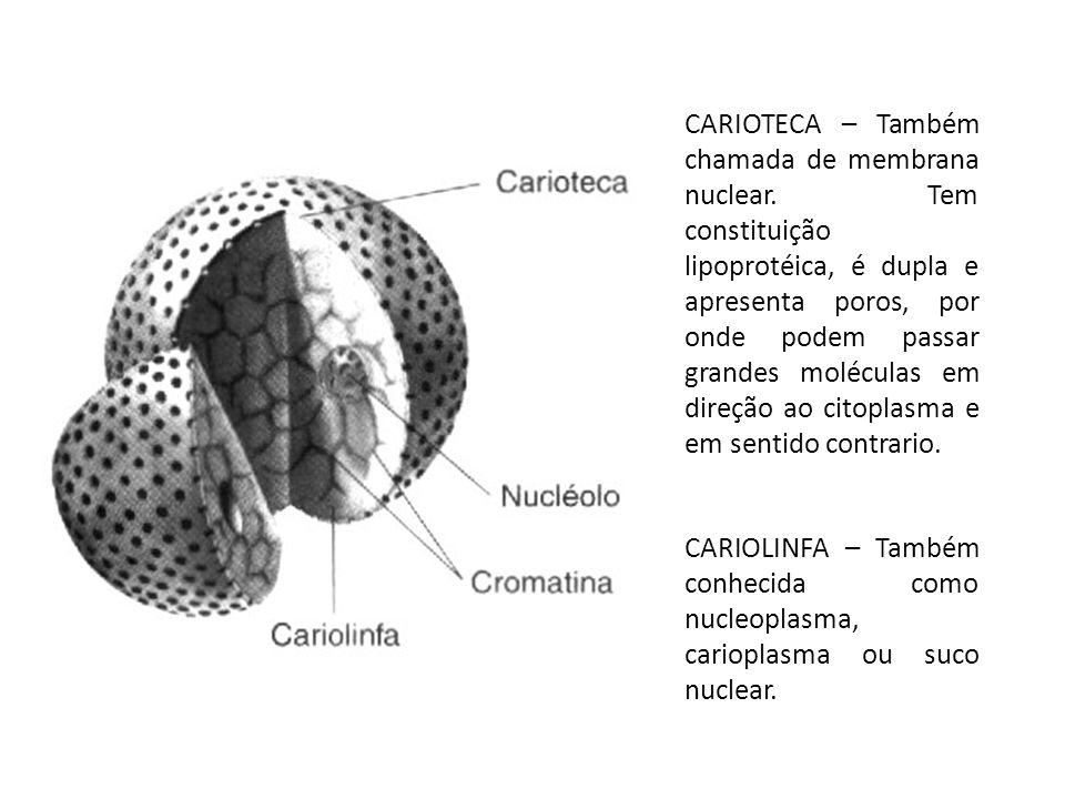 CARIOTECA – Também chamada de membrana nuclear