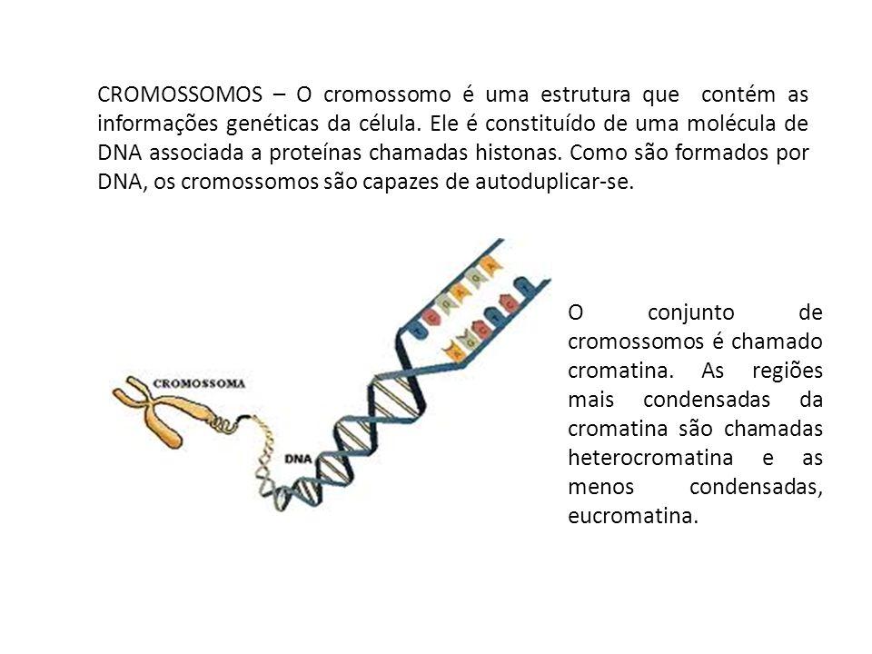 CROMOSSOMOS – O cromossomo é uma estrutura que contém as informações genéticas da célula. Ele é constituído de uma molécula de DNA associada a proteínas chamadas histonas. Como são formados por DNA, os cromossomos são capazes de autoduplicar-se.