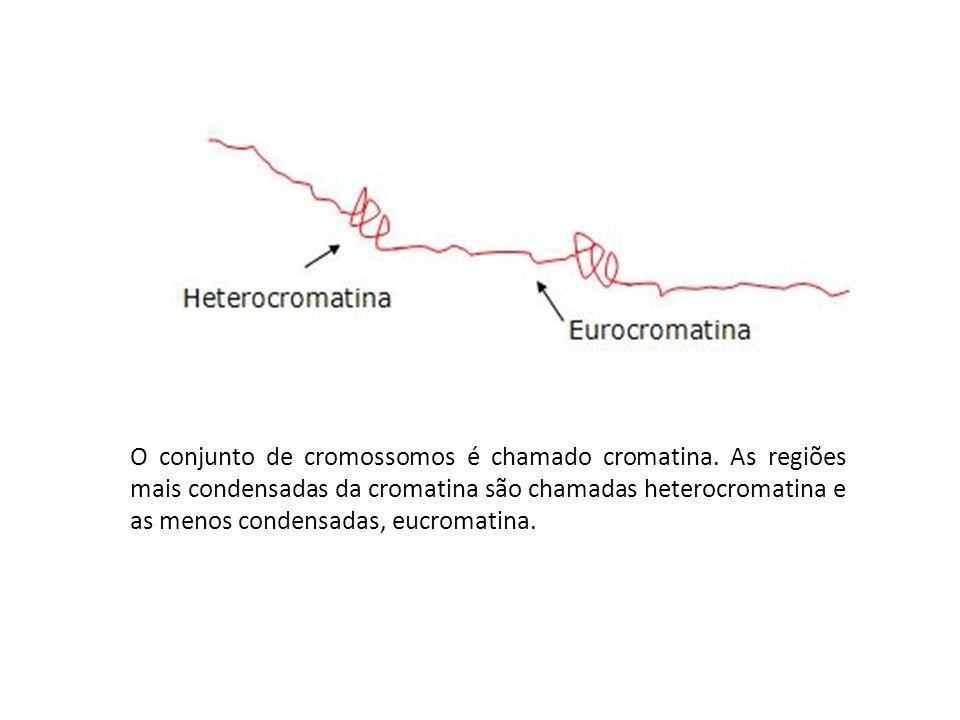 O conjunto de cromossomos é chamado cromatina