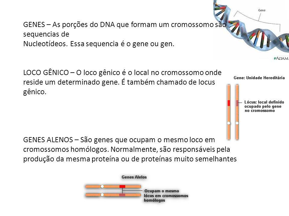 GENES – As porções do DNA que formam um cromossomo são sequencias de