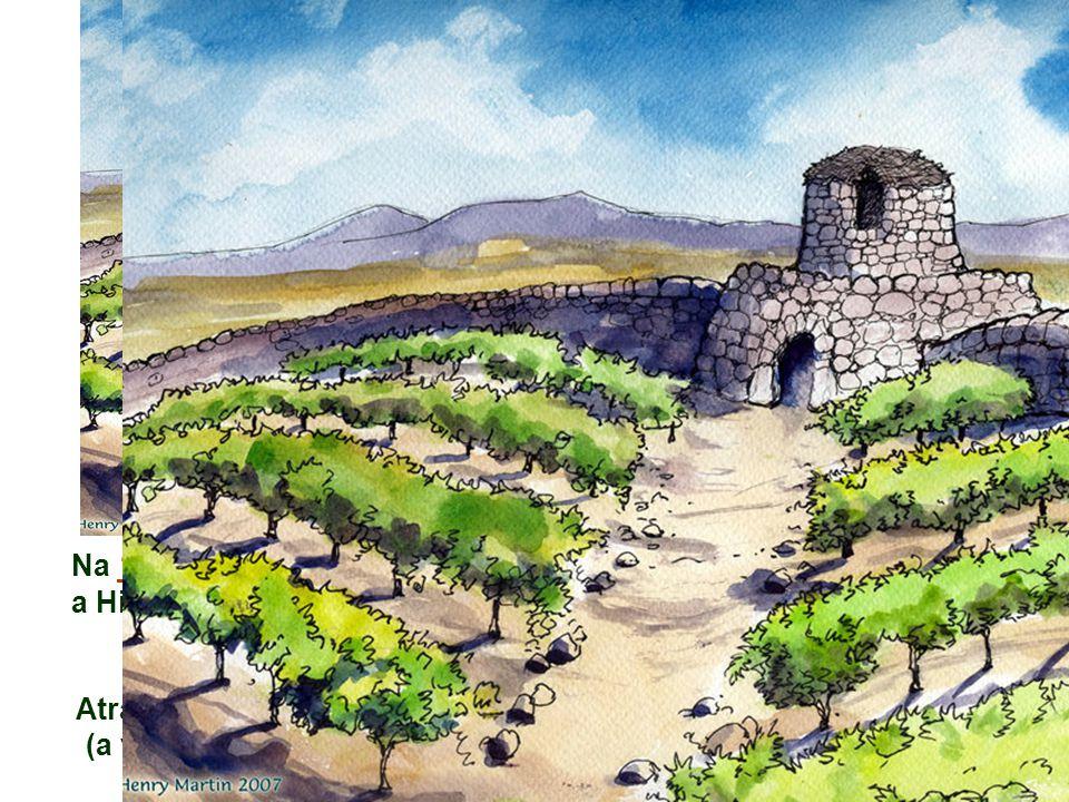 Na 1ª Leitura, Isaías, com o Cântico da Vinha , narra