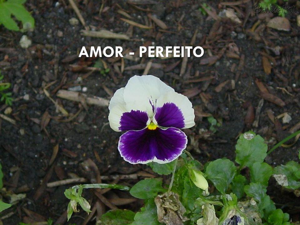 PINHEIRO AMOR - PERFEITO VIDEIRA CARVALHO LILÁS PESSEGUEIRO GERÂNIO
