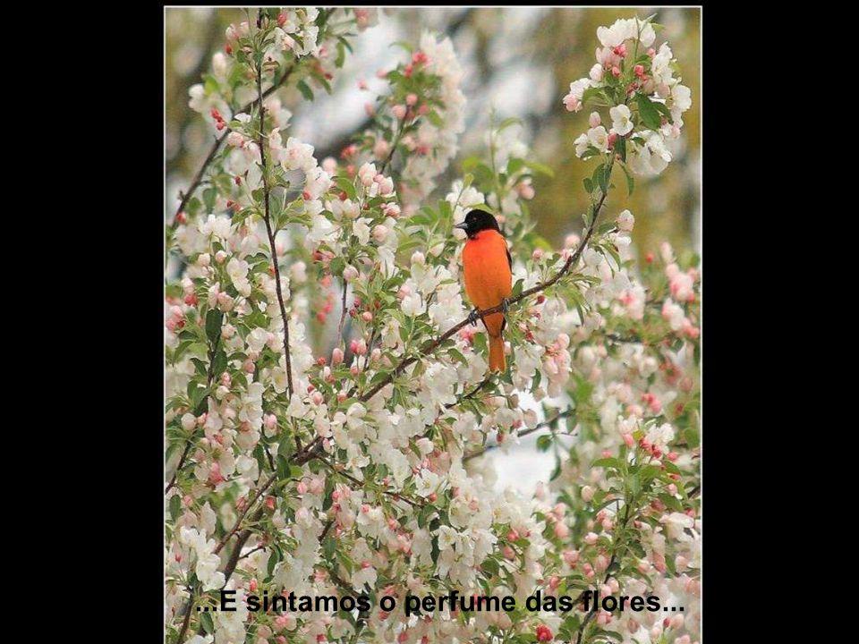 ...E sintamos o perfume das flores...