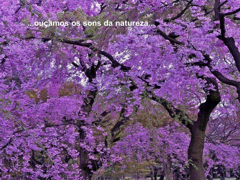 ...ouçamos os sons da natureza...
