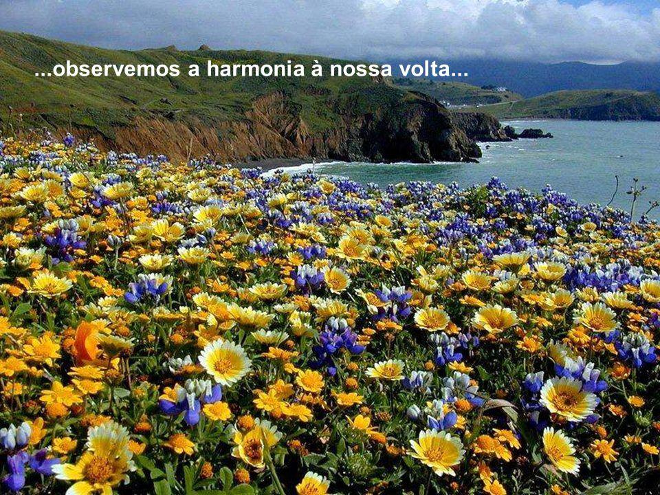 ...observemos a harmonia à nossa volta...