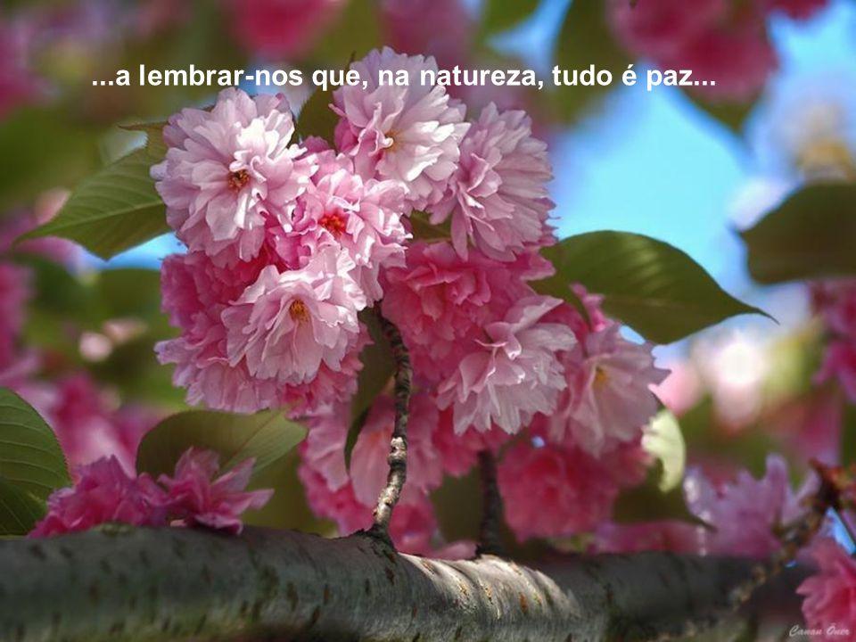 ...a lembrar-nos que, na natureza, tudo é paz...