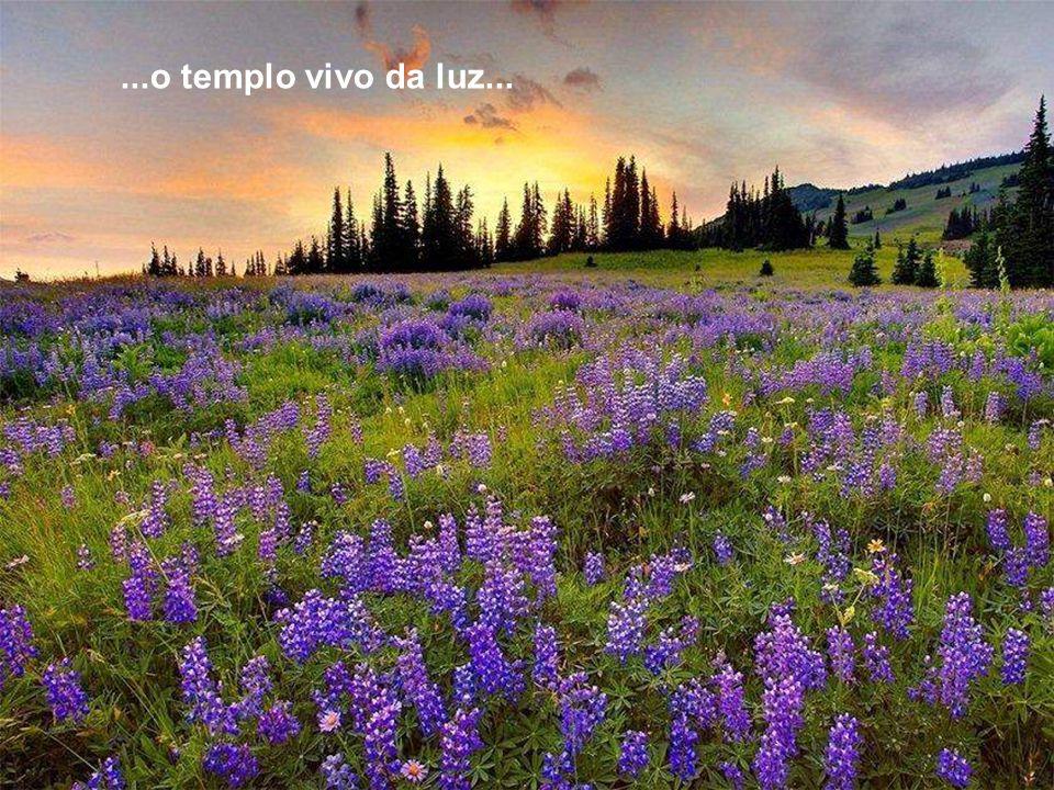 ...o templo vivo da luz...