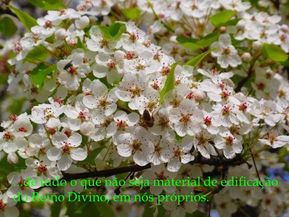 ...de tudo o que não seja material de edificação do Reino Divino, em nós próprios.