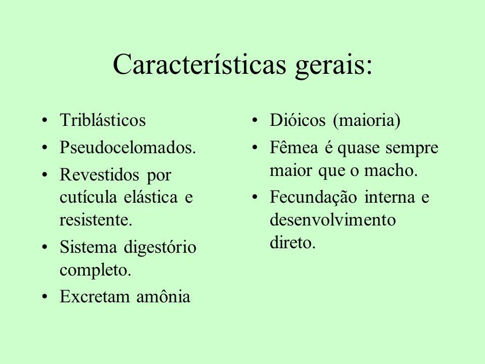 Características gerais: