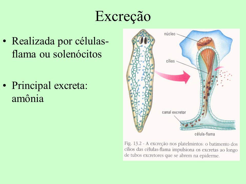 Excreção Realizada por células-flama ou solenócitos